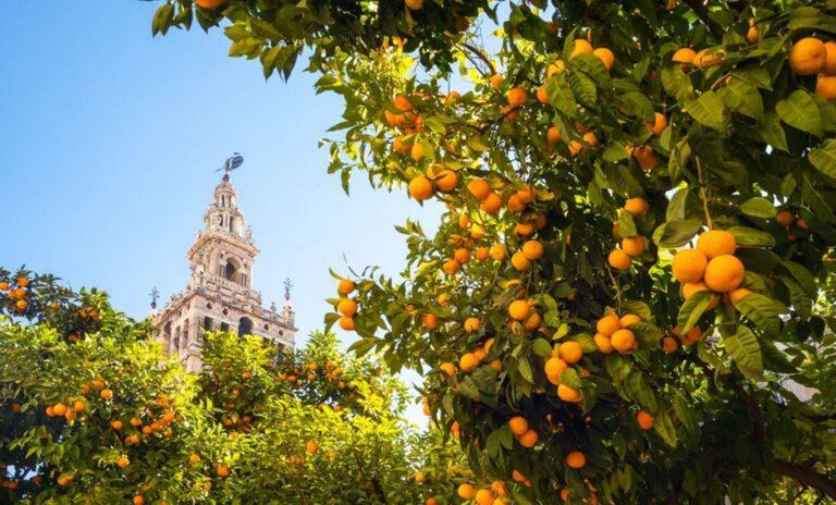 Ισπανία: Ηλεκτρική ενέργεια από τα…πορτοκάλια θα παράγει ο δήμος της Σεβίλλης